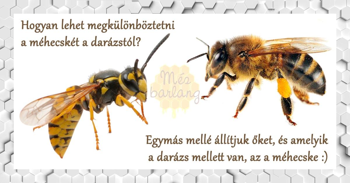 Méhecskés viccek