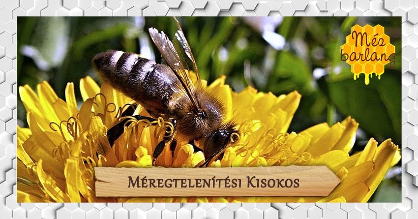 Tavaszi méregtelenítés méhtermékekkel