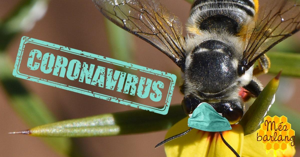 Változások a Mézbarlangban a koronavírus miatt