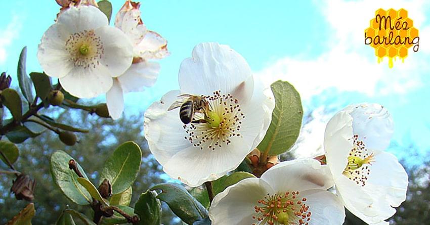 Kell a külföldi méz?