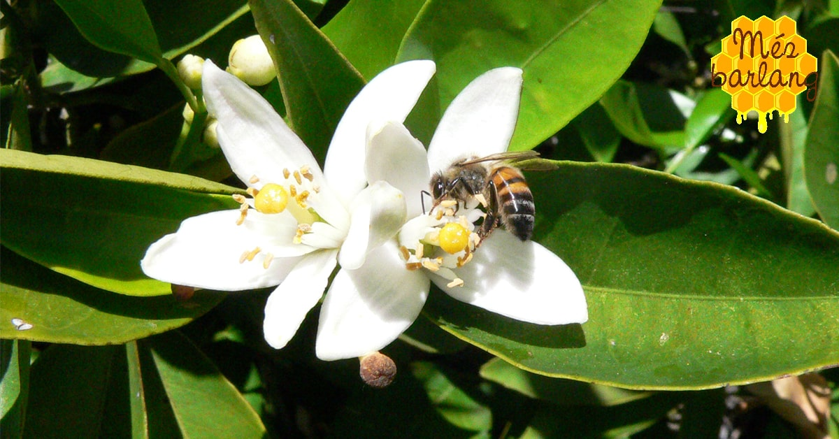 Kell-e nekünk a külföldi méz?